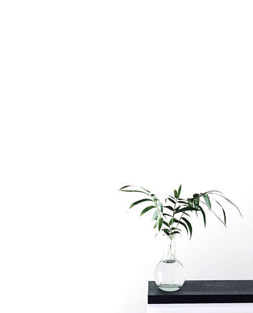White Aesthetic Plants Wallpapers   Top White Aesthetic 848x1050