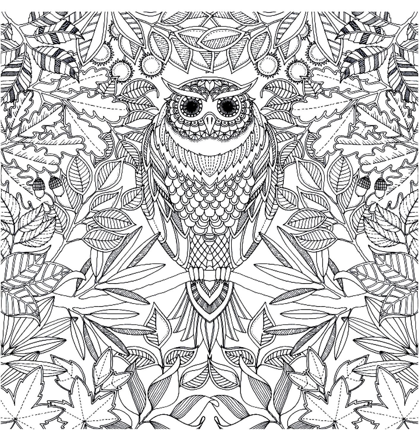 coloring page coloring adult hibou Owl with piercing look to 1412x1486