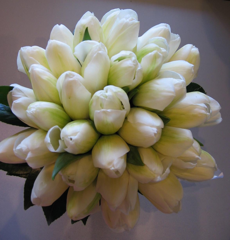 Tulip Wallpaper: White Tulips Wallpaper