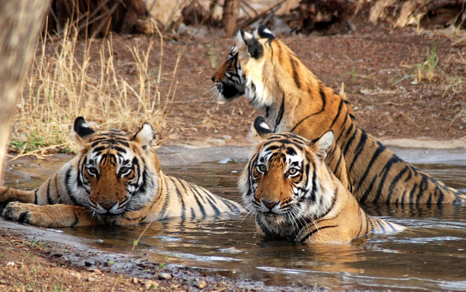 Sundarban 1600x1004