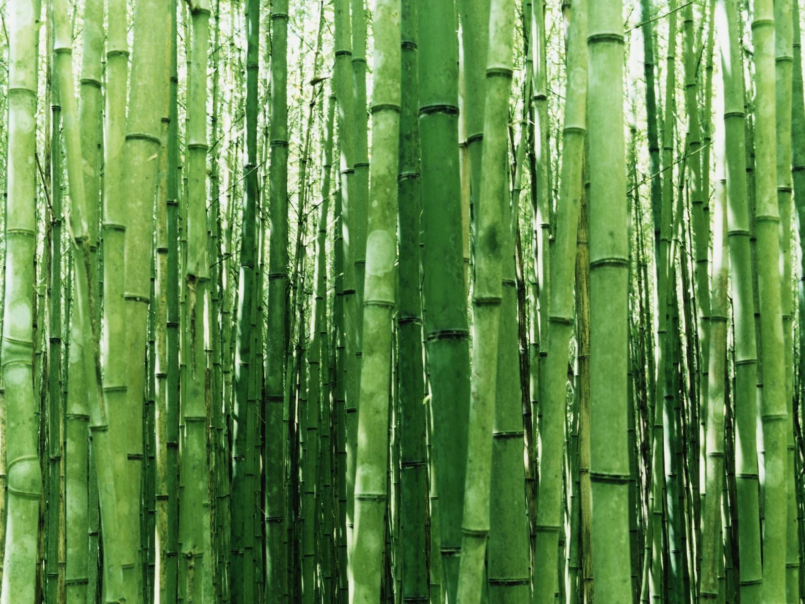 Image Title zen bamboo wallpaper japan 1600 1200 1600x1200