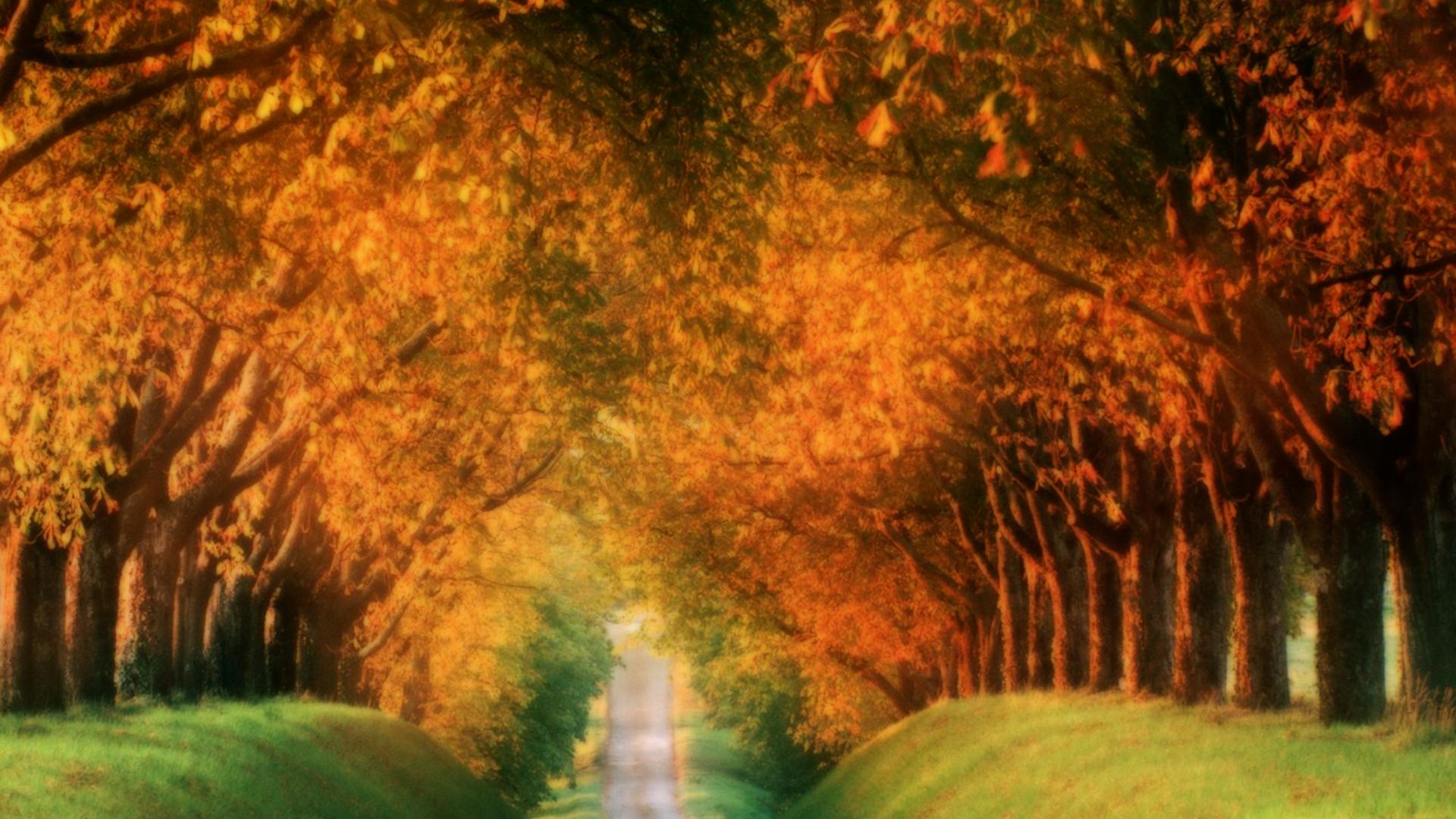 Fall Autumn Desktop Wallpaper 1920x1080