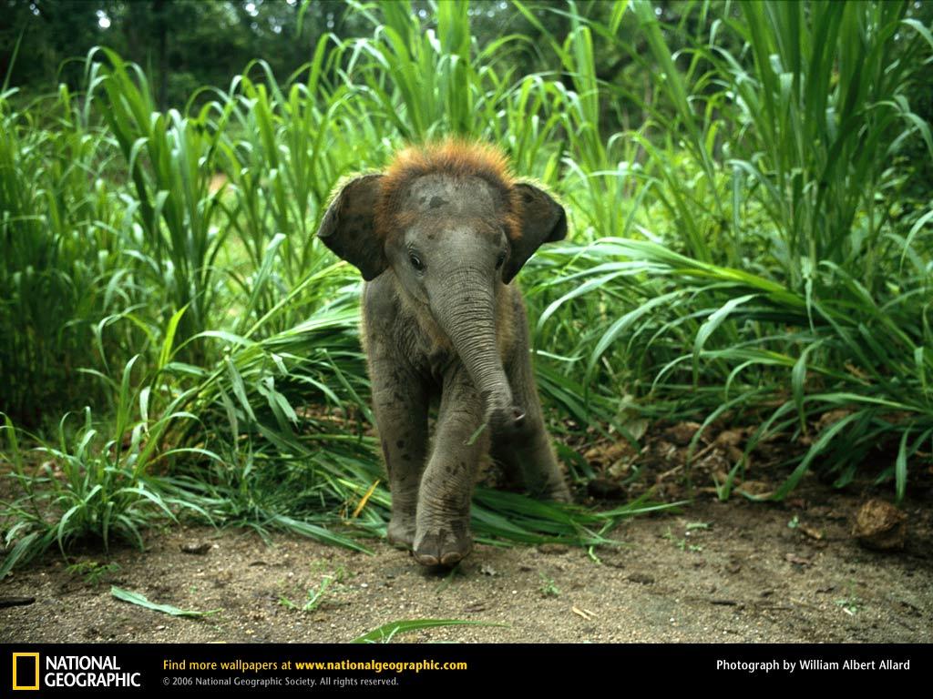 Baby Elephant Wallpaper 1024x768 pixel Popular HD Wallpaper 37856 1024x768