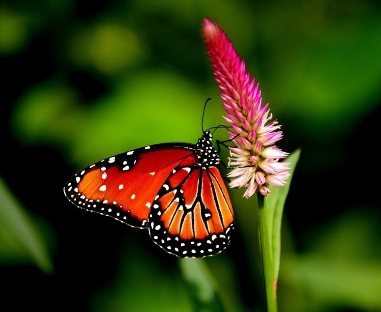55 Colorful ButterflyHD Images Wallpapers Download 786x644