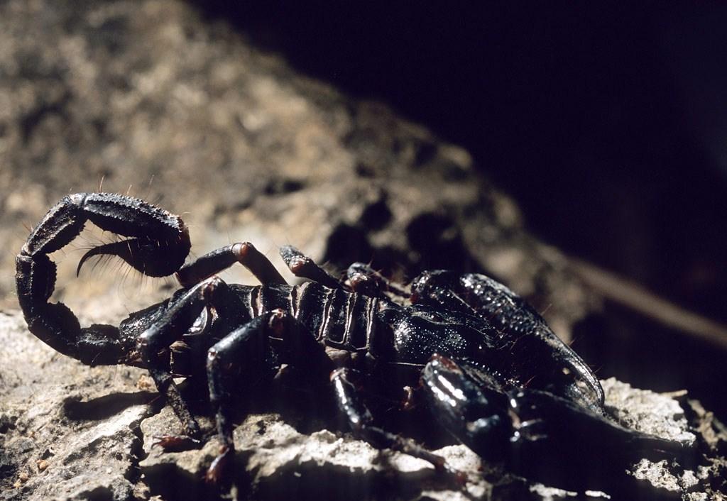 энди были фотографии скорпион лучшие обои сначала тёща