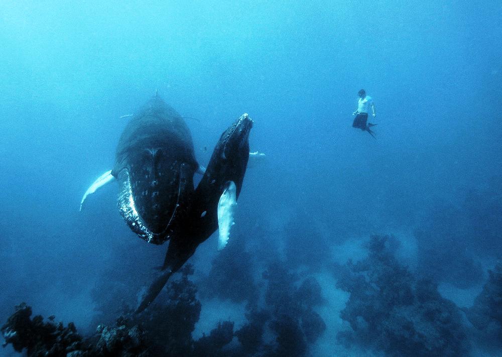 free diving 04 09 2015 1600x950px 198 55 kb diving 17 06 2015 1000x711