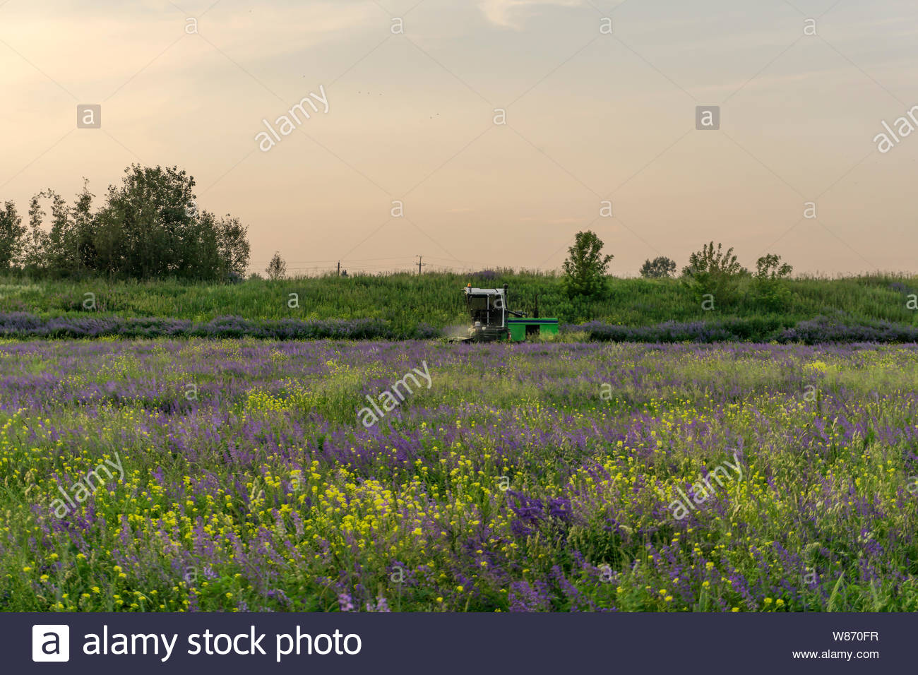 pastoral landscape with a flowering meadow and a machine for 1300x956