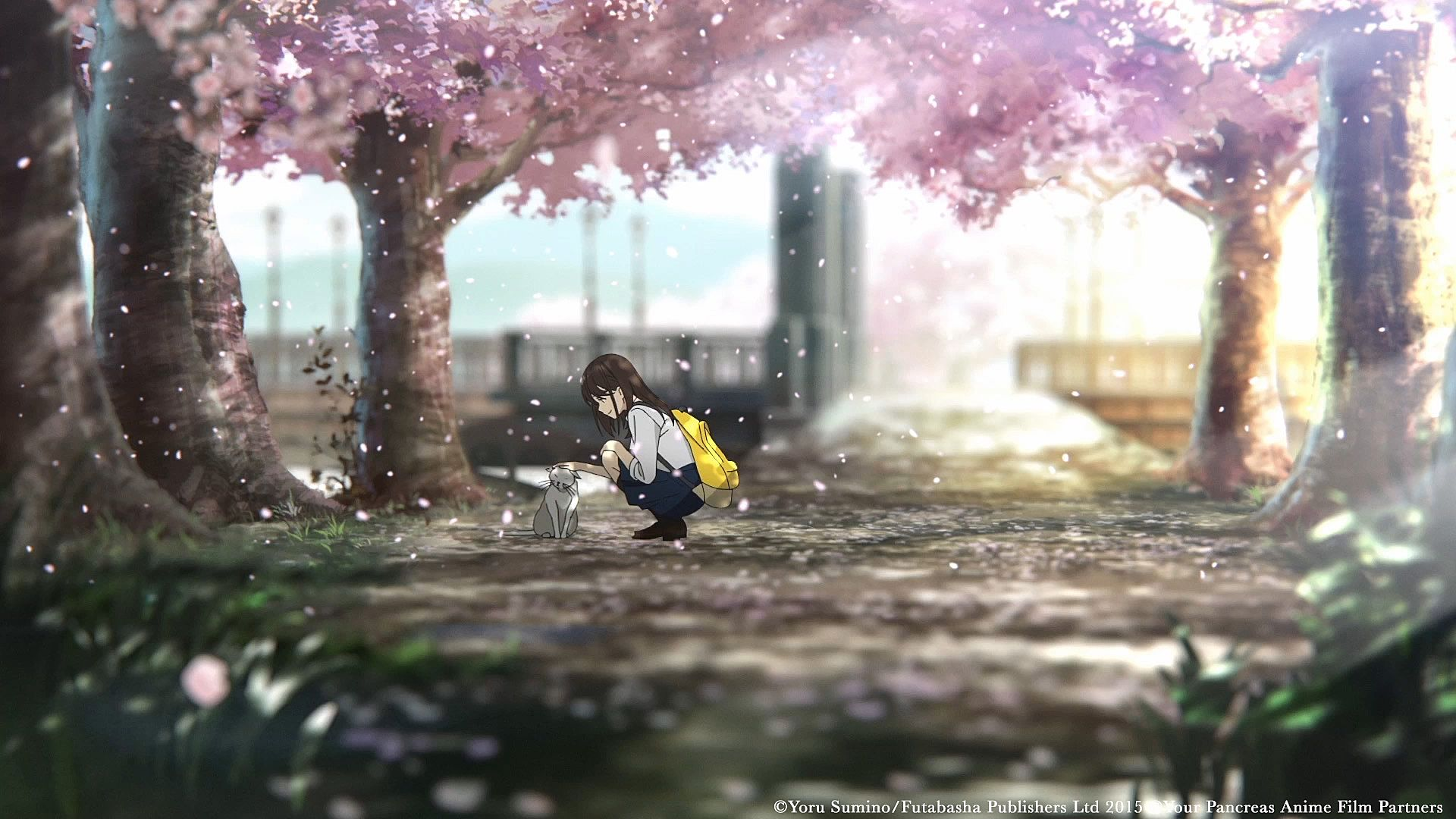 12 I Want To Eat Your Pancreas Wallpapers On Wallpapersafari