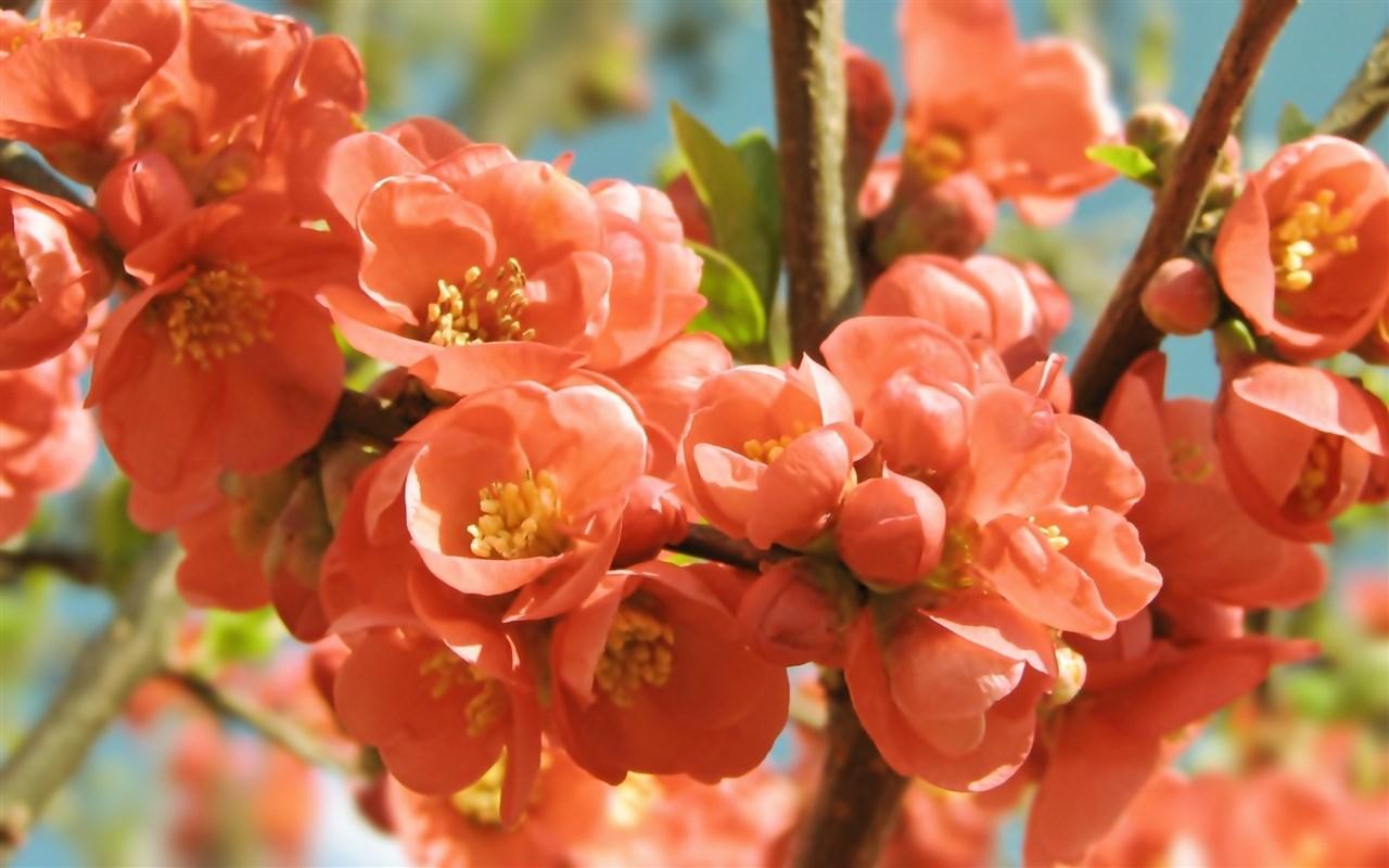 Blooming Flowers Spring Season Wallpaper Download wallpapers page 1280x800