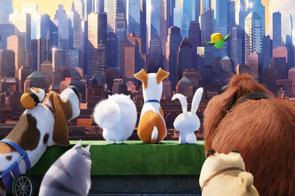 The Secret Life of Pets 2016 Movies HD Wallpapers 960x640