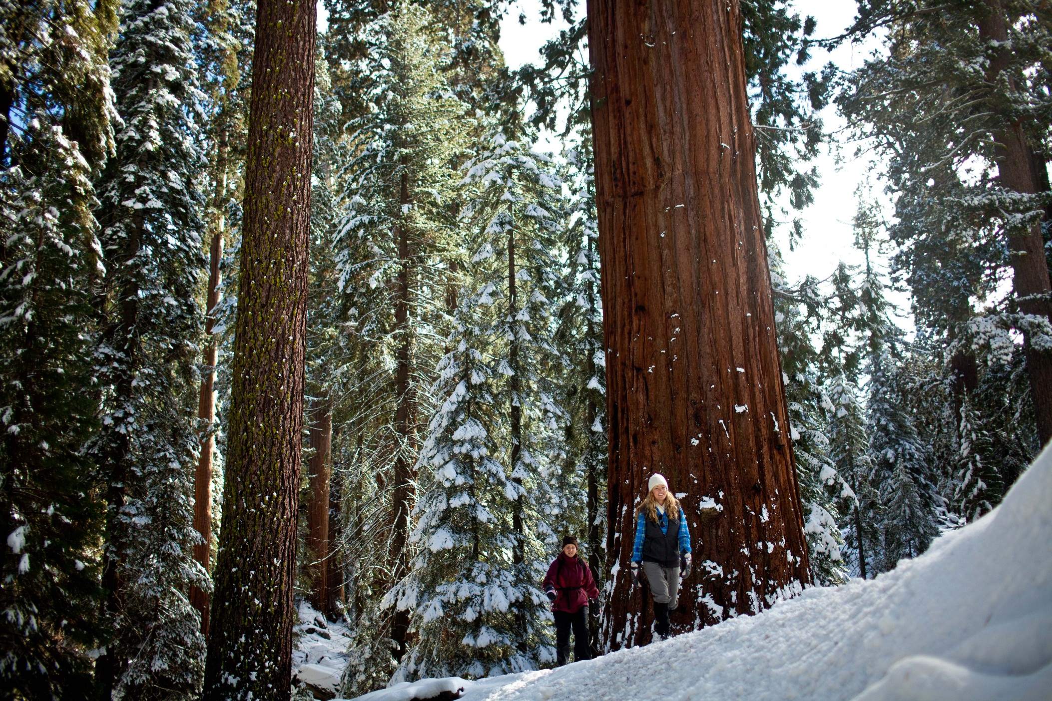 Sequoia National Park Images   HD Wallpapers Backgrounds of Your 2106x1404