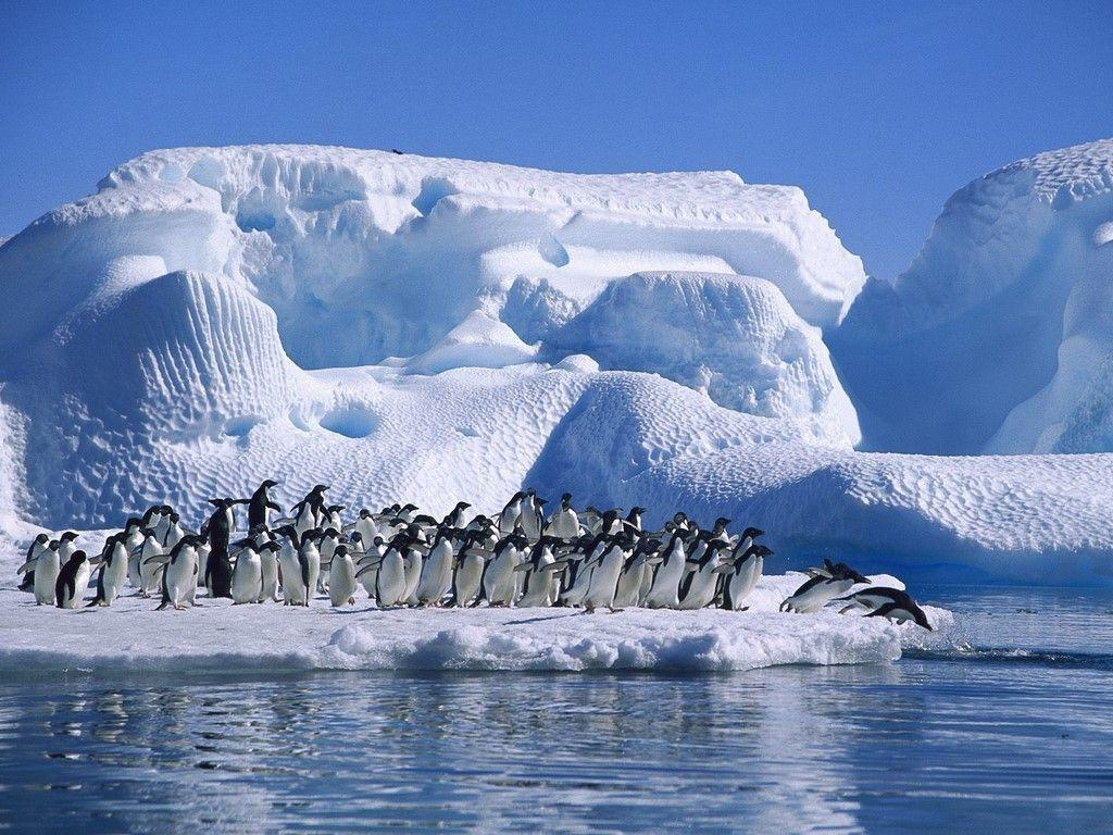 Antarctica Wallpapers 1024x768