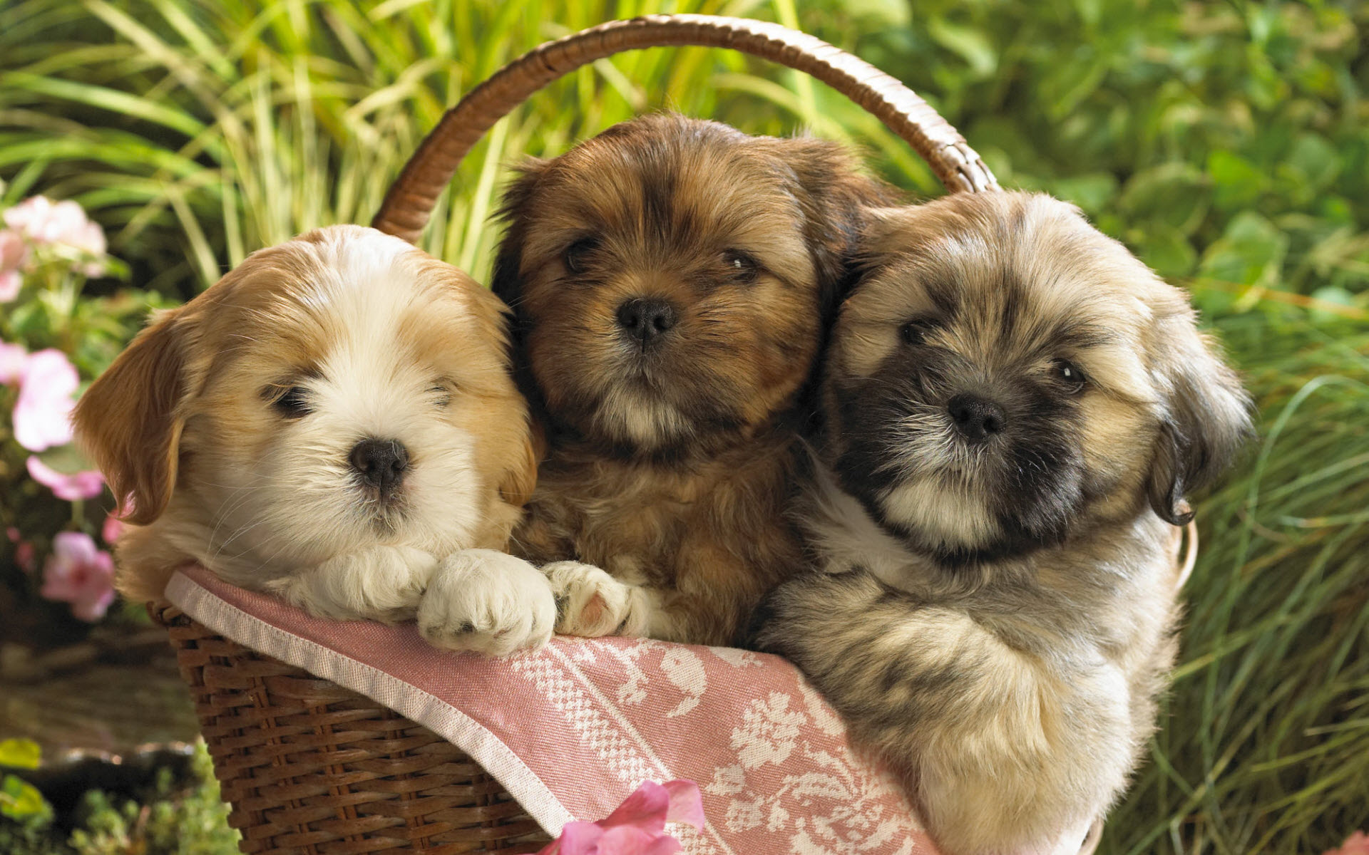 Cute Puppies 2 Wallpapers HD Wallpapers 1920x1200