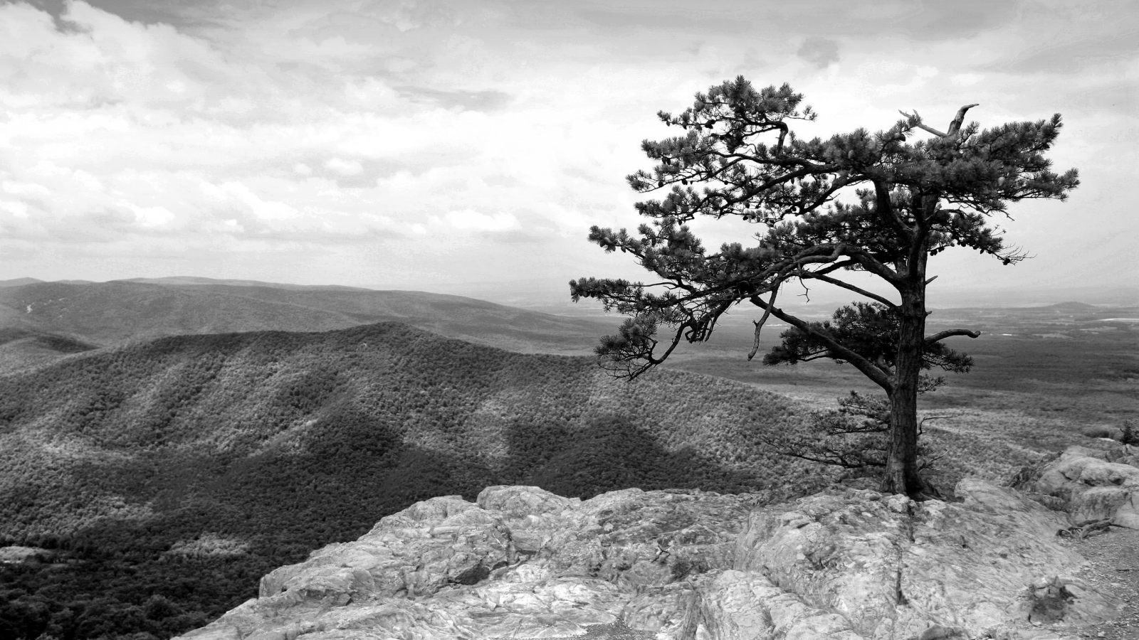 Black and White Lone Tree Nature Photography 1600x900