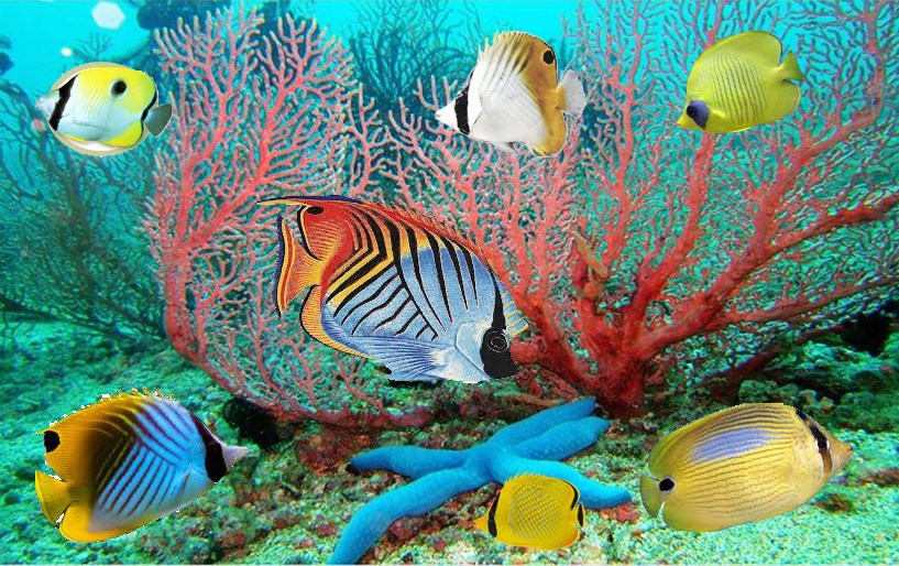 moving fish wallpaper wallpapersafari