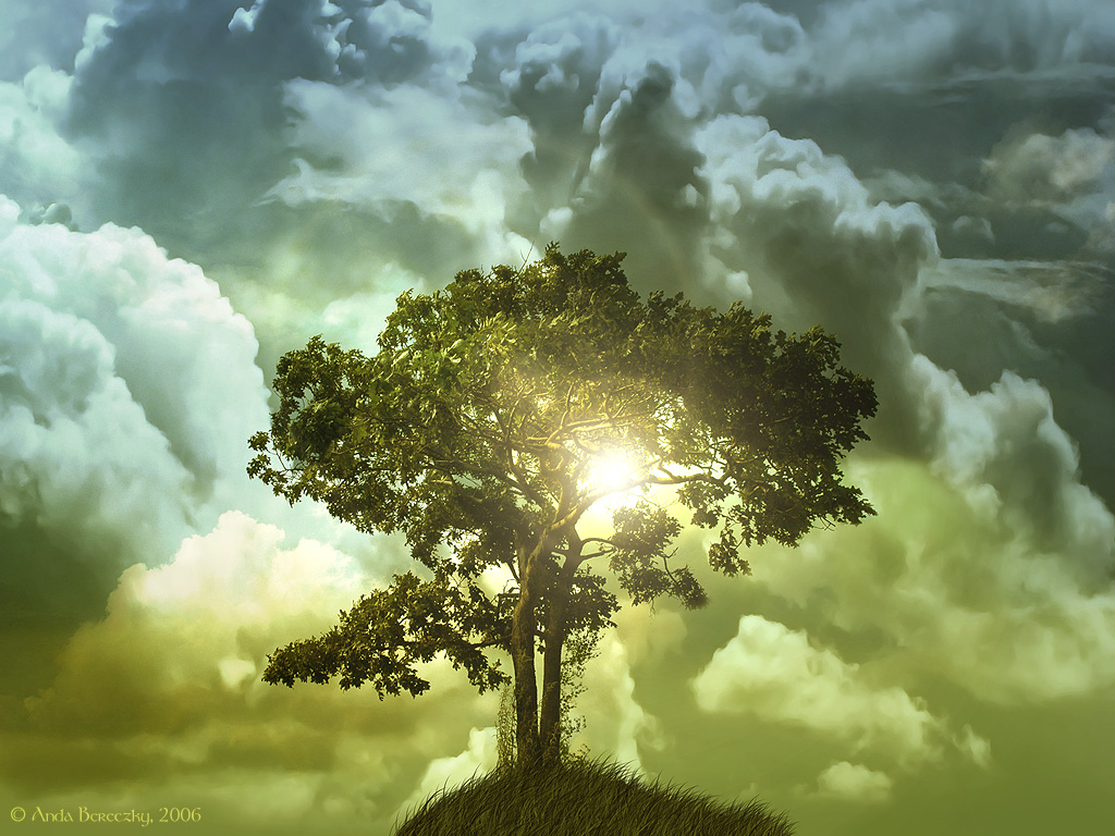 Windows Vista Wallpaper The Tree of Life Wallpaper 1024x768