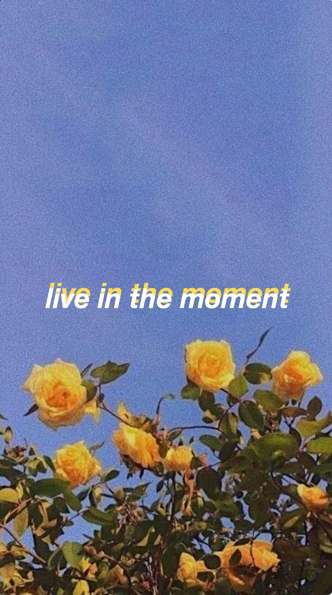 flaming hot cheetos  clairo lyric wallpapers in 2019 Pinterest 1060x1899