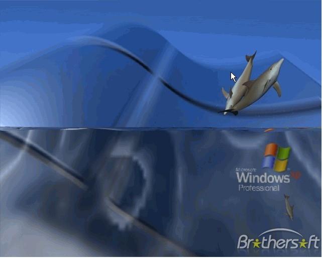 3D Desktop Wallpaper Dolphins   wwwwallpapers in hdcom 641x514
