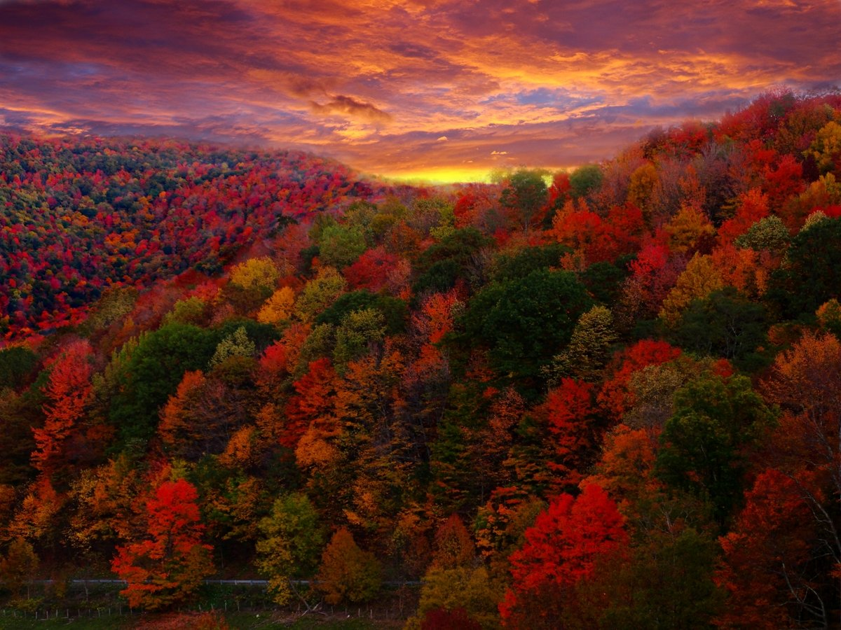 FileFall Foliage Photographyjpg   Wikimedia Commons 1200x900