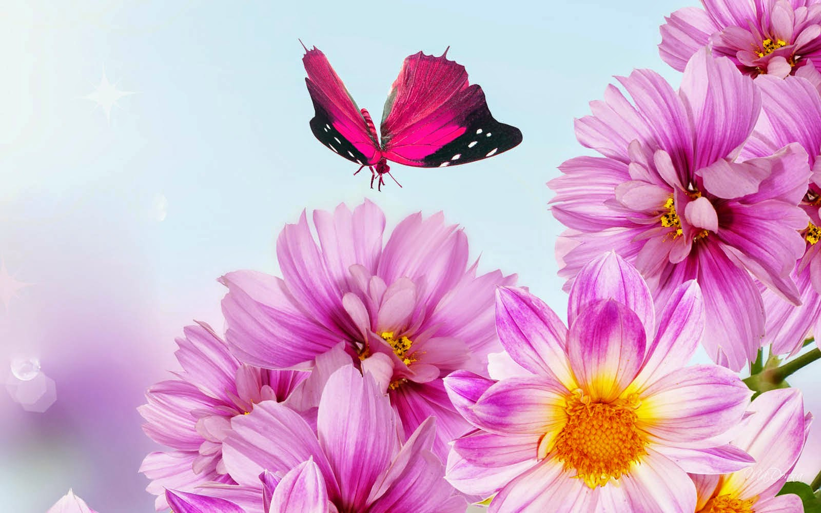 CUTE PICTURES Colorful Butterfly HD Wallpapers Real Artistic 1600x1000