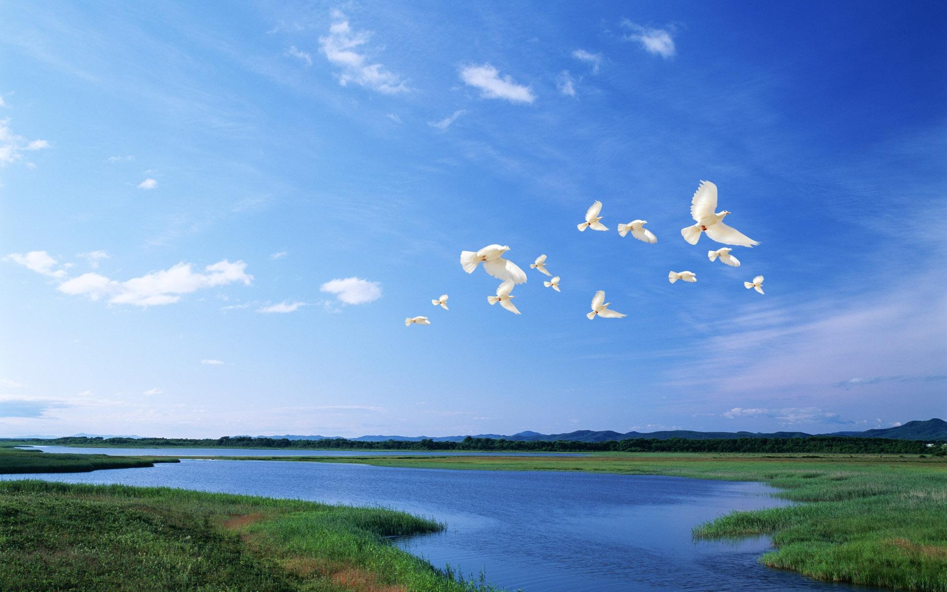 Wallpaper birds white Flight river sky light 1920x1200 1920x1200