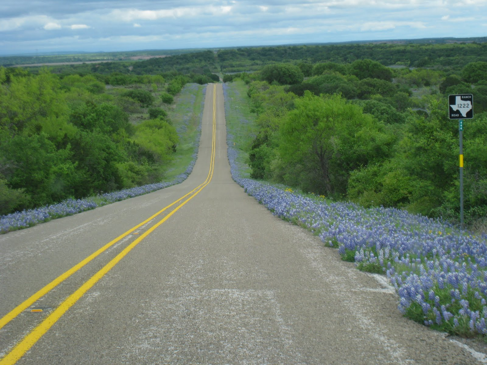 Texas Country Wallpaper Texas hill country flowers 1600x1200