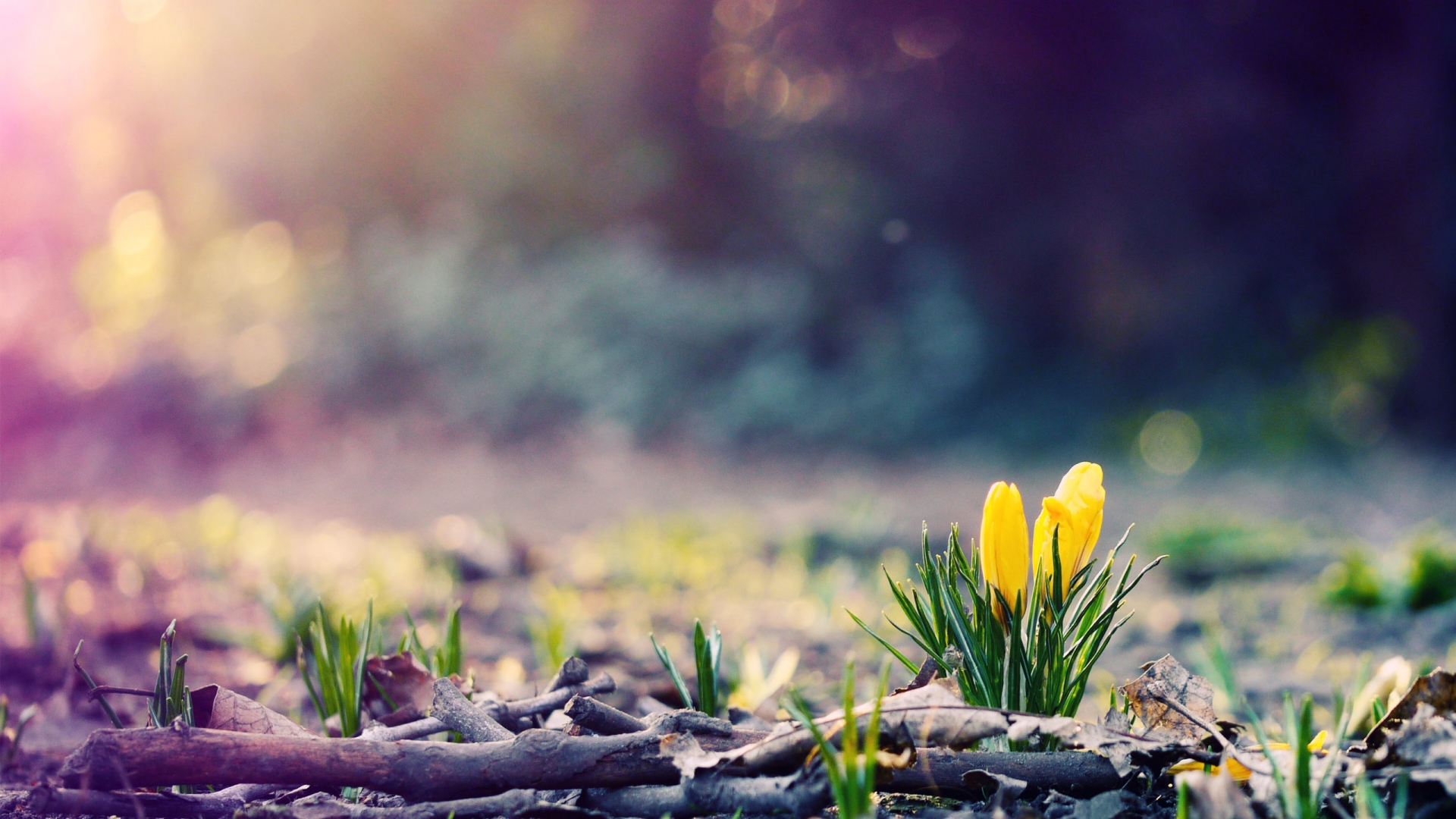 spring hd wallpapers 1080p