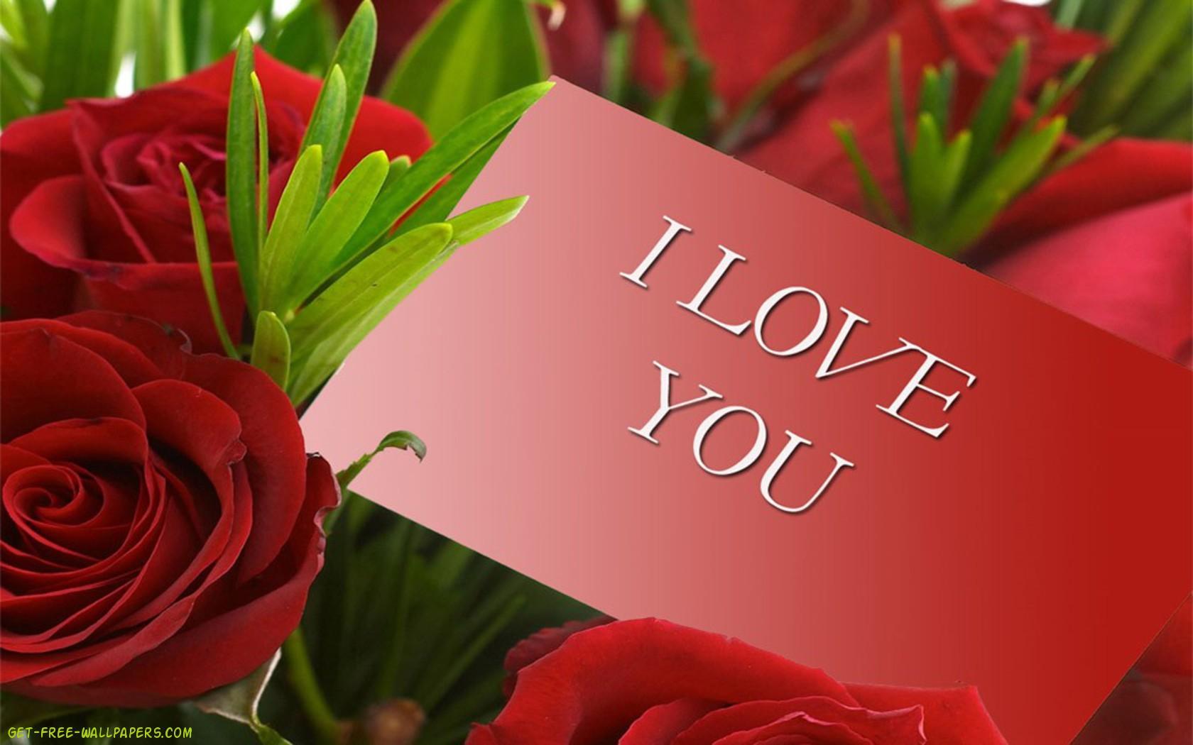 Wallpaper Flower Rose Love Wallpapersafari