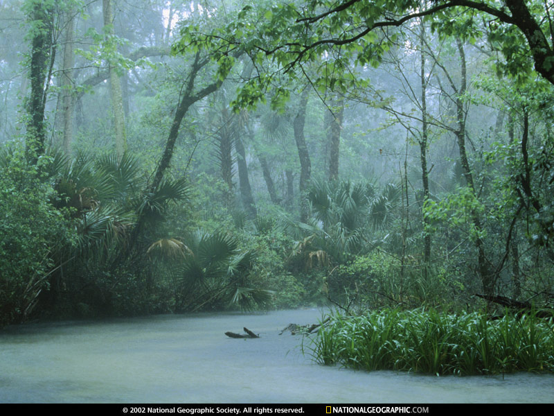 1964 the United States began designating roadless areas as wilderness 800x600