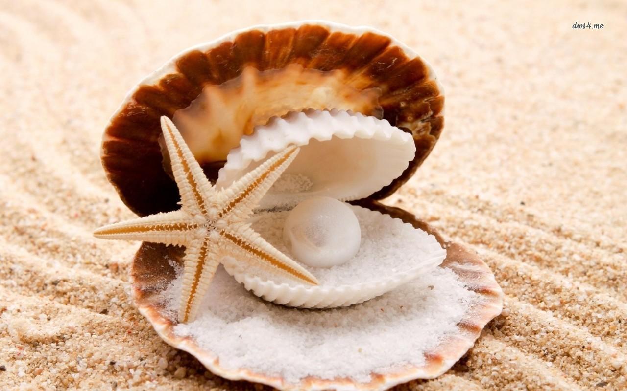 [68+] Sea Shells Wallpaper on WallpaperSafari