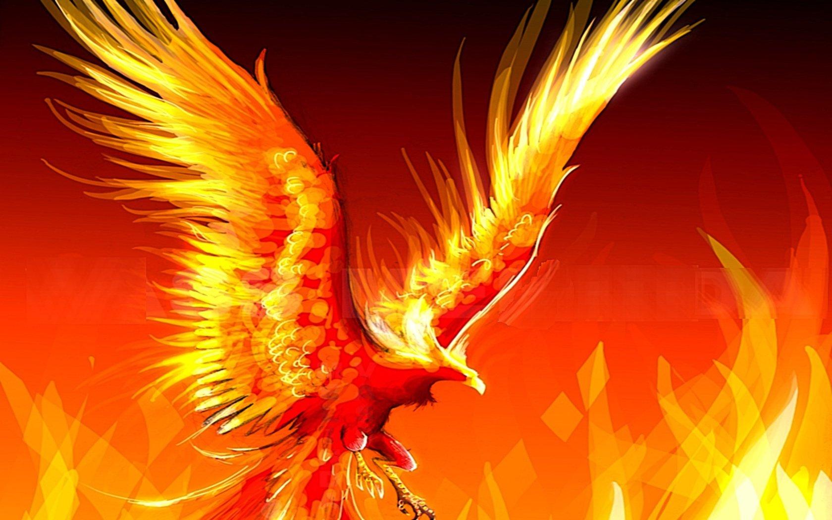 Phoenix Wallpaper 1680x1050 Phoenix 1680x1050