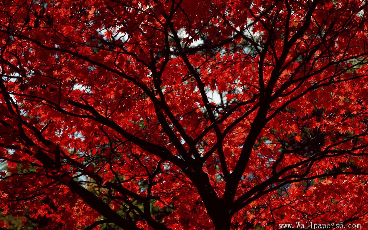 Red Leaves Wallpaper - WallpaperSafari