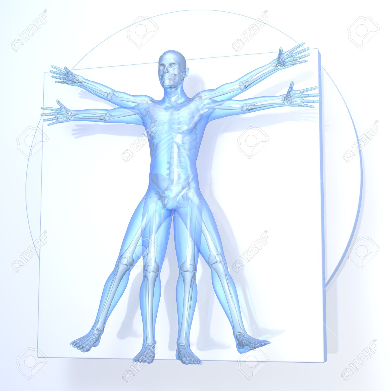 Leonardo Da Vinci Vitruvian Man Transparent Blue On White 1300x1300