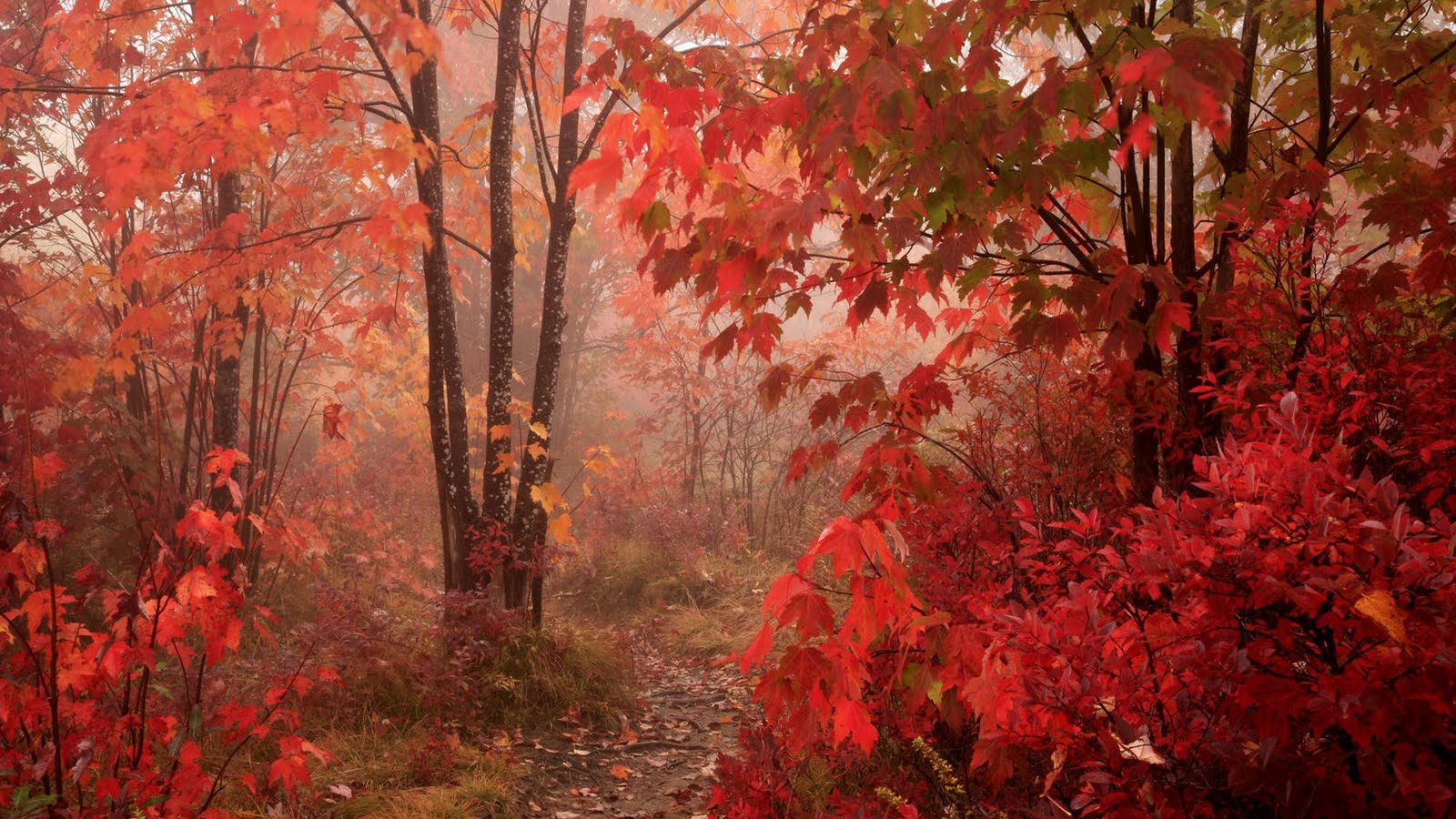 Fall Red Leaves Forest Floor Autumn Season Colors Epic HD Wallpaper 1600x900