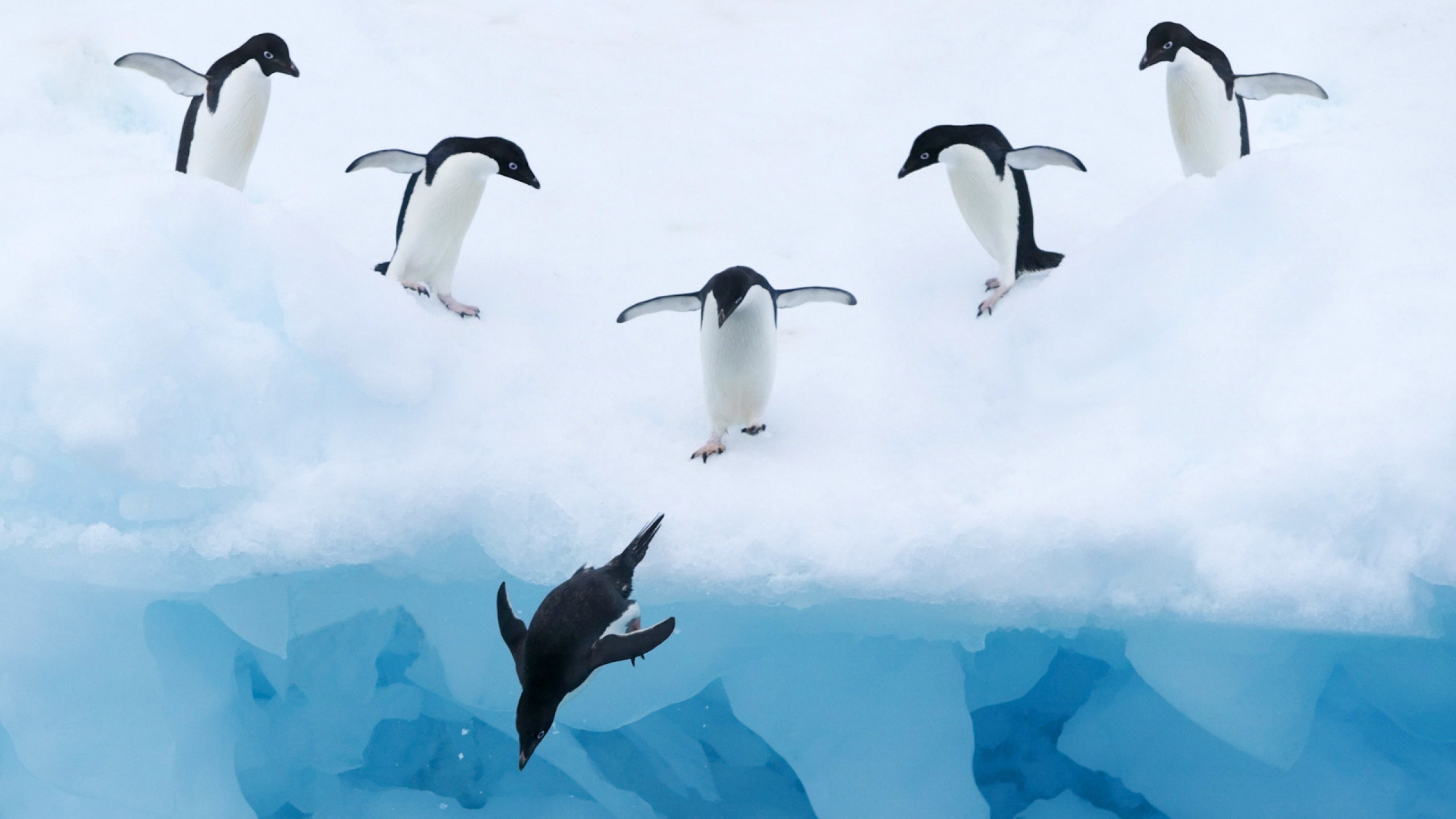 Birds Penguin In Antarctica Hd   Penguin In Cold Water 973604 2560x1440