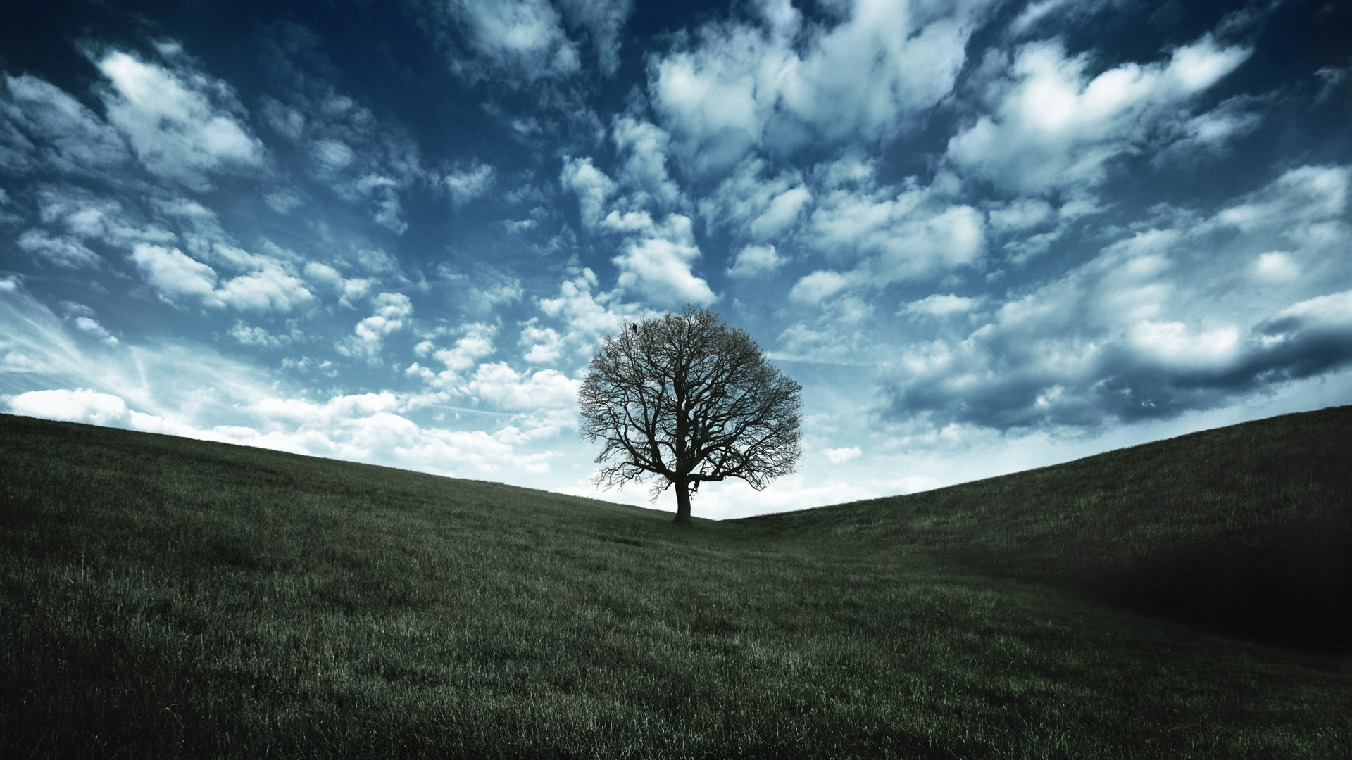 Oak Tree Crow Landscape Wallpaper High Quality 1920x1080