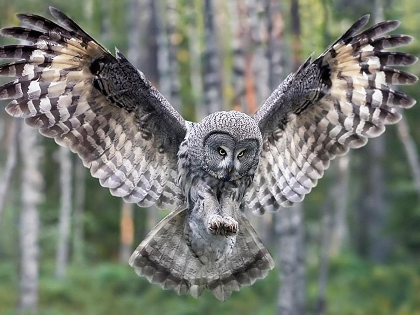 Labels Bird Owl 1600x1200