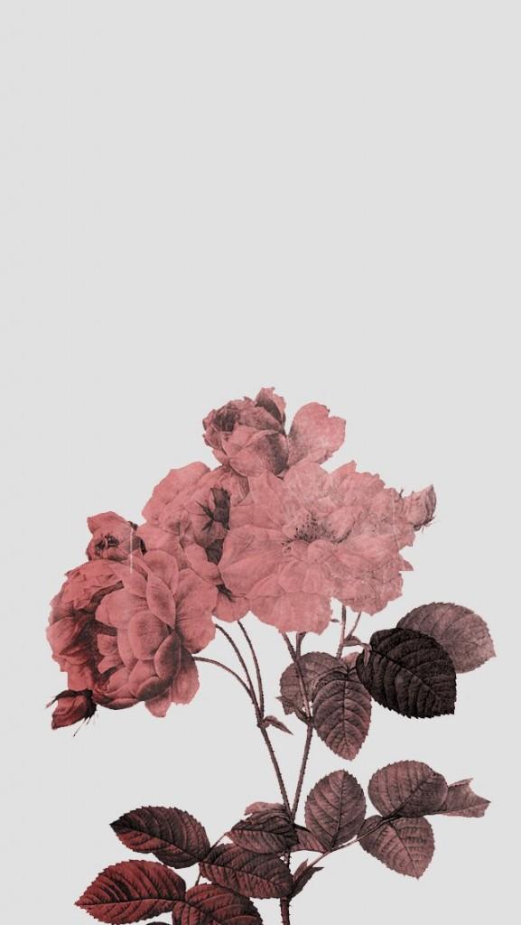 Iphone 6s Rose Gold Wallpaper Hd Vinny Oleo Vegetal Info