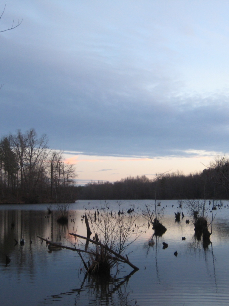 download sitting duck check out ducks unlimiteds duck hunt 768x1024