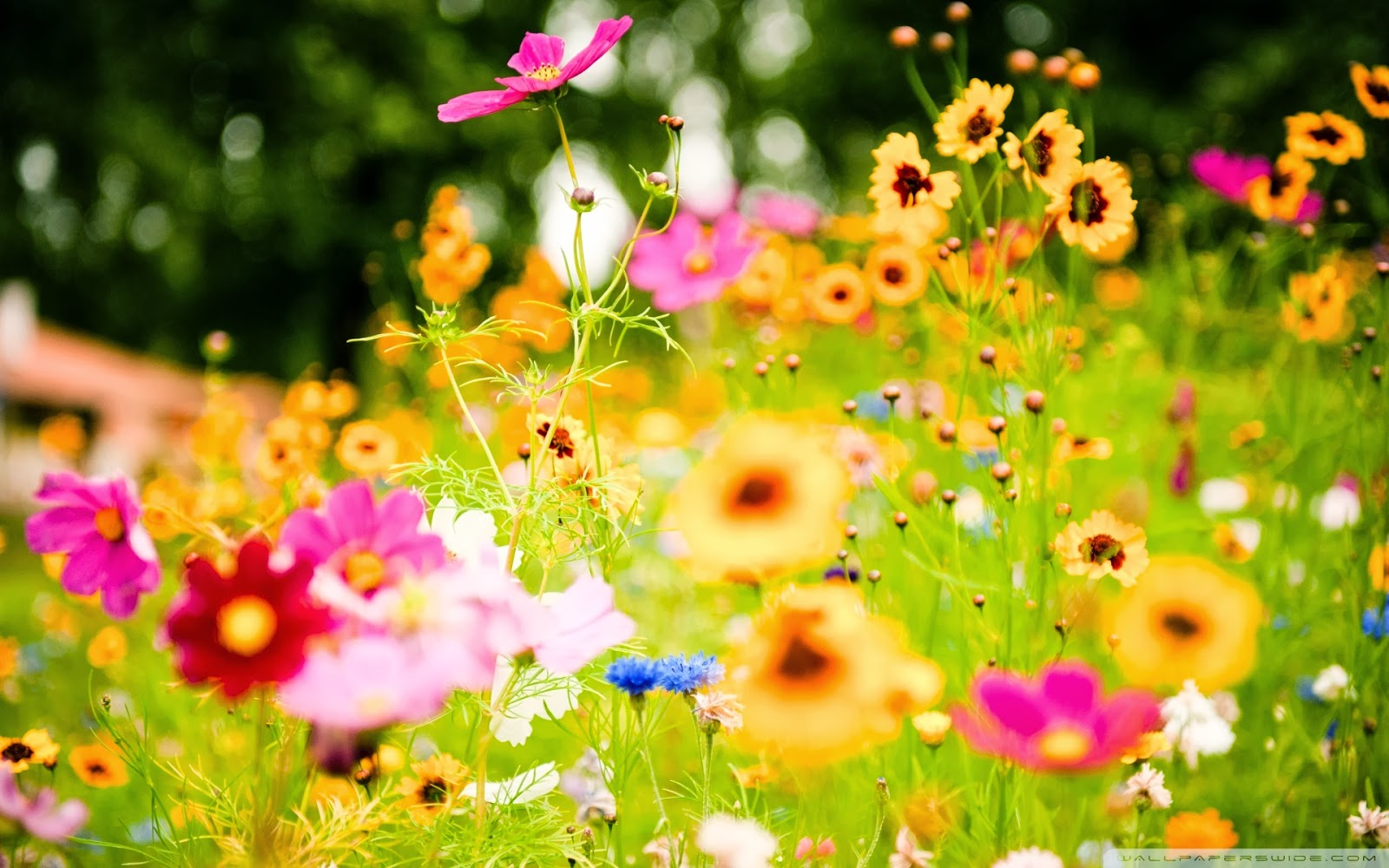 Summer flowers wallpaper and make this Summer flowers wallpaper for 1600x1000