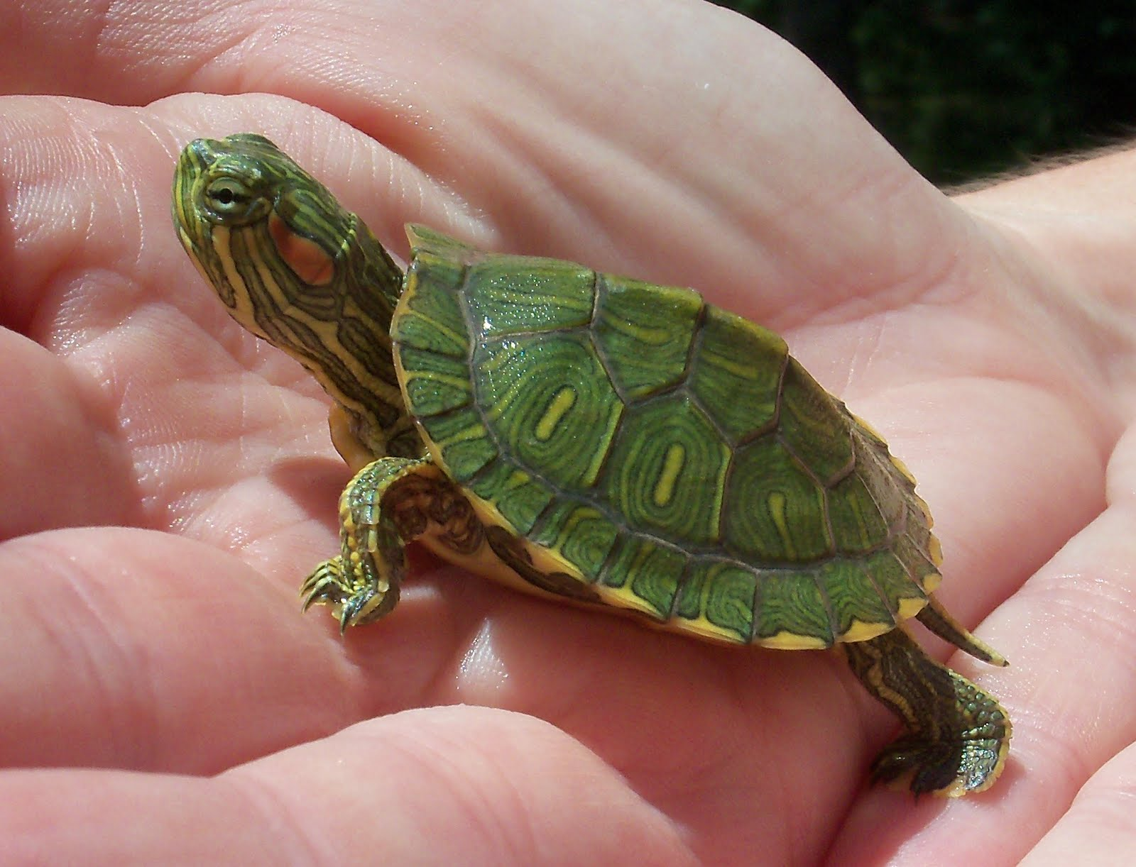 Angie Kay Dilmore Baby Turtle Finds a Home 1600x1222