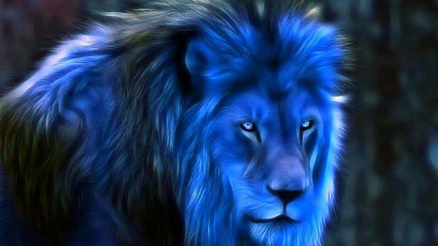 Midnight Blue Fantasy Blue Lions Wallpapers Wallpapers 1440x810