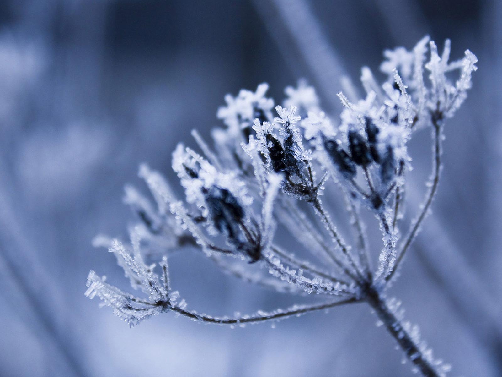 Frost Flower   Wallpaper 18058 1600x1200