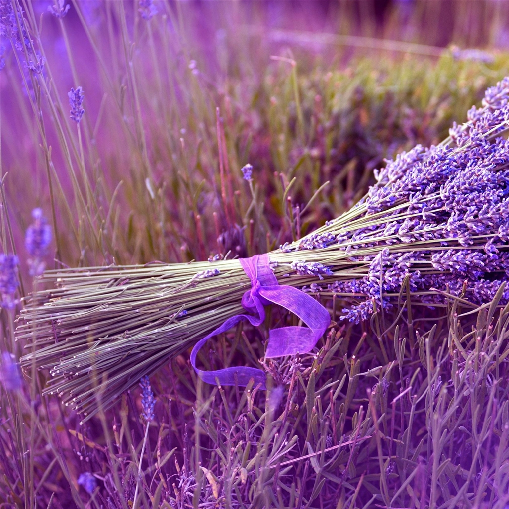 Lavender iPad Air Wallpaper Download iPhone Wallpapers iPad 1024x1024