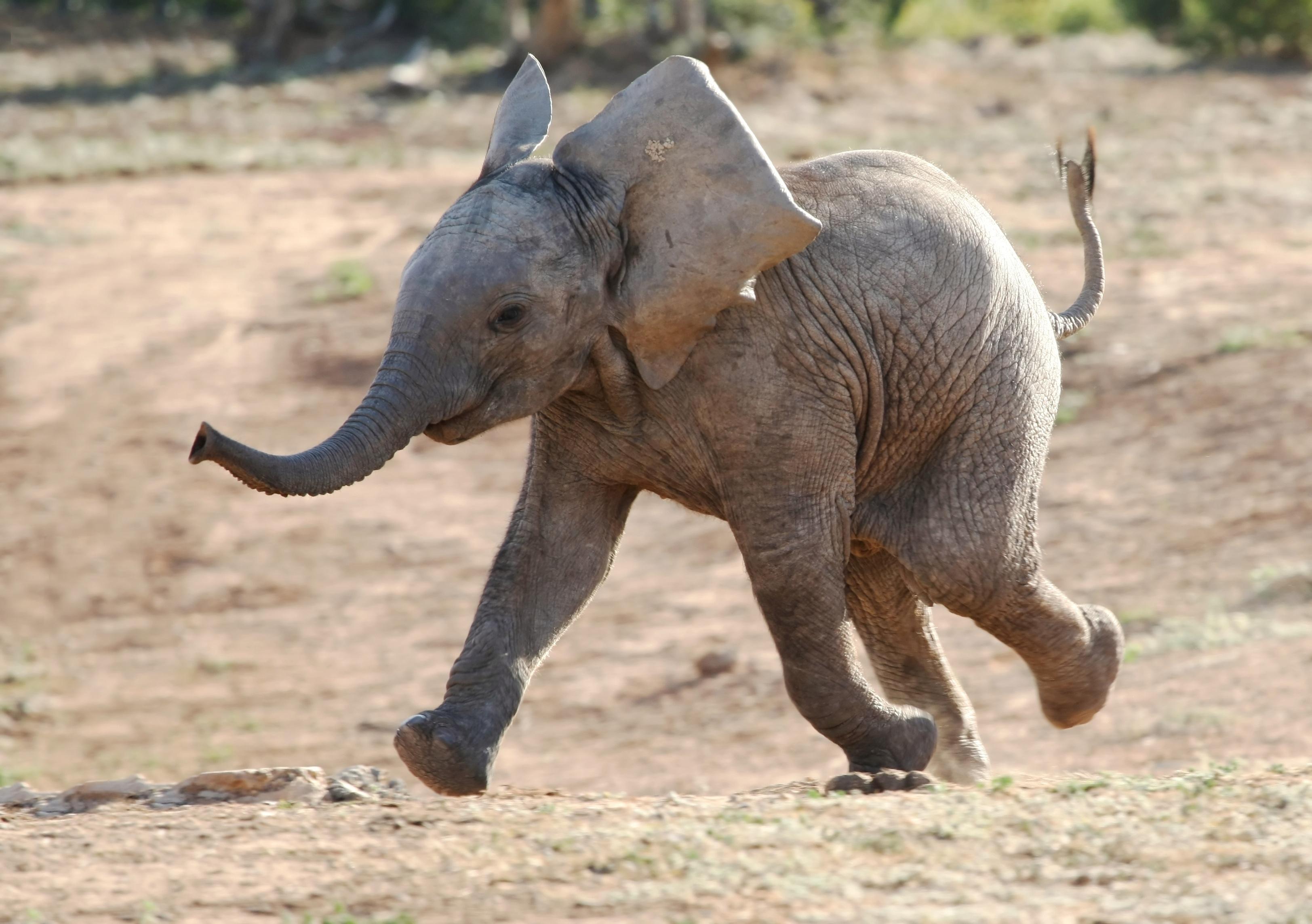elephant baby elephant baby elephant wallpaper elephant elephant 3247x2286