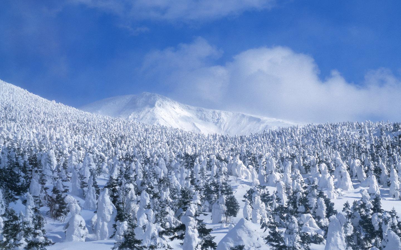 Winter Snow Photos   Snow Scenes Wallpapers 1440900 NO17 Wallpaper 1440x900