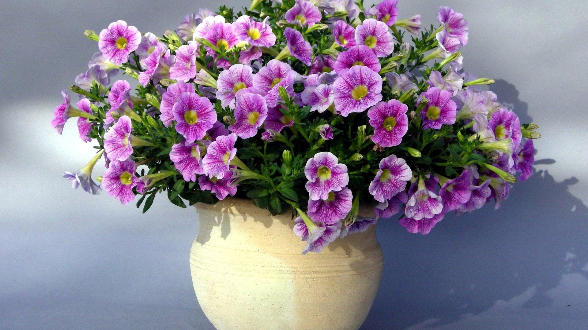 Description Purple Flowers Vase Wallpaper is a hi res Wallpaper for 1920x1080