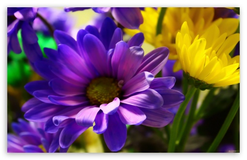 My Flowers HD wallpaper for Standard 43 54 Fullscreen UXGA XGA SVGA 510x330