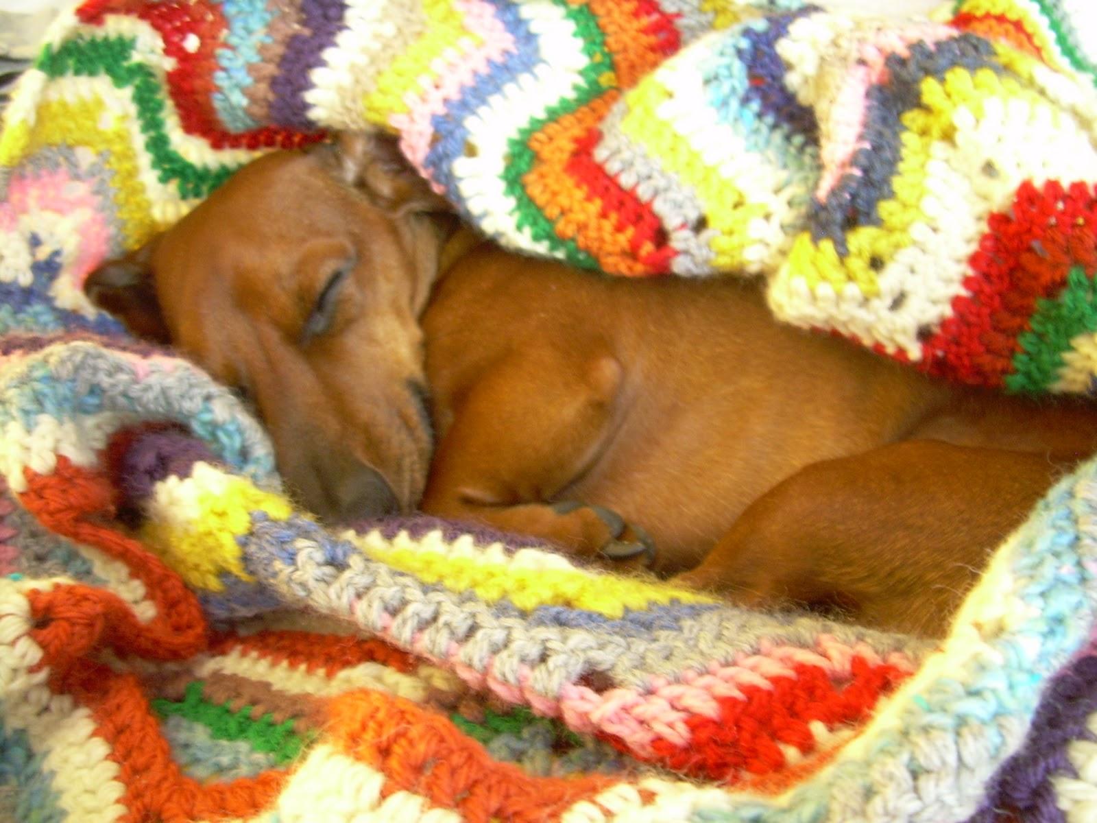 Desktop Weiner Dog Wallpapers 79 images in Collection Page 1 1600x1200