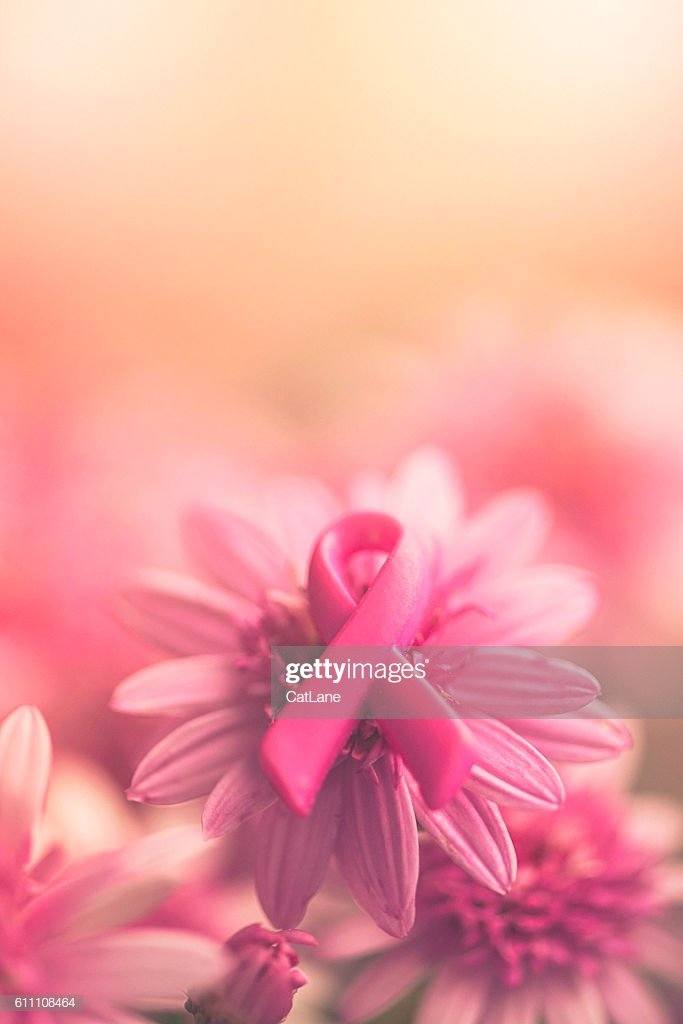 Breast Cancer Awareness Ribbon On Pink Flowers With Soft 683x1024